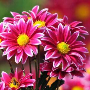Ramos Florales para el Día de la Madre
